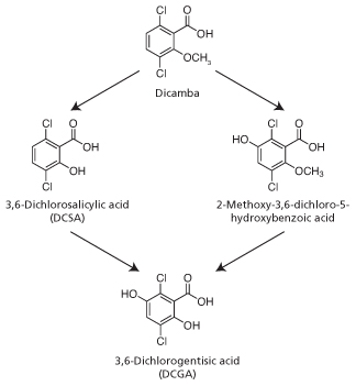 Dicamba and metabolite structure