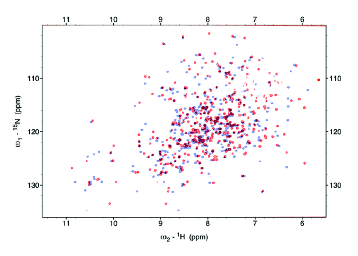 Maltose Binding Protein Chart